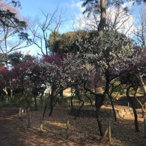 宝来公園の梅と初スキレット