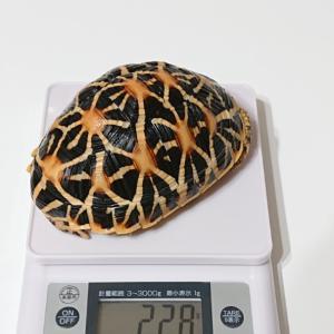 体重測定。