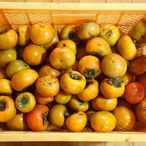 今朝の収穫物。