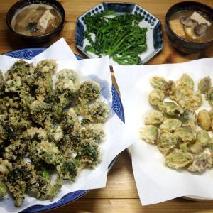 八幡浜産天然手摘みのフキノトウと自家栽培ブロッコリーの天ぷらほか。