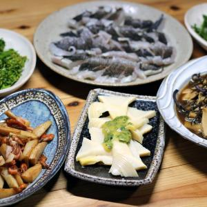 日曜日に掘ってきたタケノコの木の芽味噌和え・炒めもの・煮もの、八幡浜近海産メジナの皮焼きほか。
