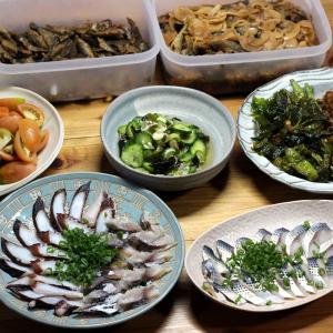 自家栽培キュウリの酢のものとサラダ、夏野菜の揚げ浸し、自家獲りタコの刺し身、〆サバ、〆コノシロ他