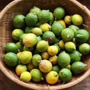自家栽培レモンを収穫しました。