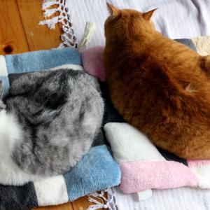 ナマコのようなうちの猫たち。