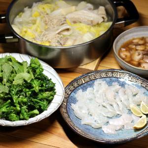 自家栽培コマツナとブロッコリーのサラダ、八幡浜近海産ヒラメの刺し身、ナマコ、ハクサイ鍋。