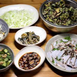 きょう採ってきたクロアワビ・メガイアワビ・サザエの刺し身、カメノテ塩茹で、ナマコ酢ほか。