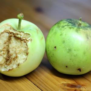 リンゴとハクビシン。
