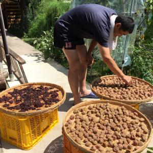 真夏の大事な仕事。自家製梅干の土用干し。