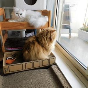 『①我が家で言うところの猫団子?!』