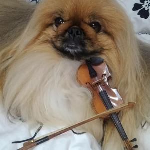 バイオリニスト、ライライ♪