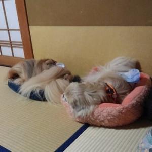 その3.湯田中温泉と善光寺に行ってきた♪
