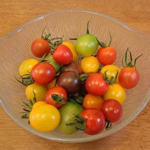 カラフルなミニトマトミックスは美味しい!
