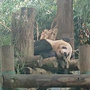 遠足日和 上野動物園に行ってきました