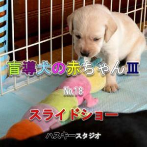ママ犬日誌3-18(24日齢)スライドショー