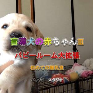 ママ犬日誌 3-19(26日齢)パピールームを大拡張