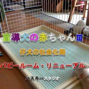 ママ犬日誌 3-24(30日齢)パピールーム・リニューアル