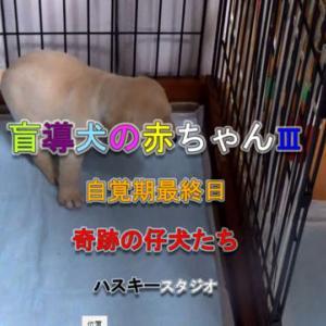 ママ犬日誌 3-23(28日齢)奇跡を起こす仔犬たち