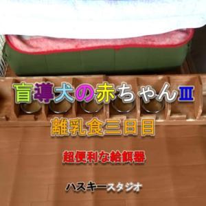 ママ犬日誌 3-21(28日齢)超便利な給餌器