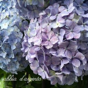 白、青、紫、ピンク、色とりどりの雨模様。