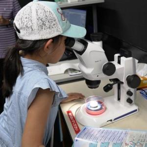 基礎生物学研究所 一般公開