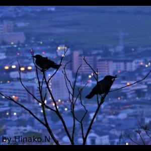 夜景とカラス