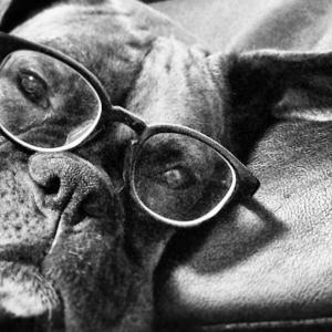 盲導犬について考えた。 〜人と犬との共生〜