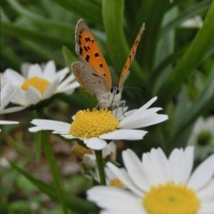 庭の蝶々さんを見ながら