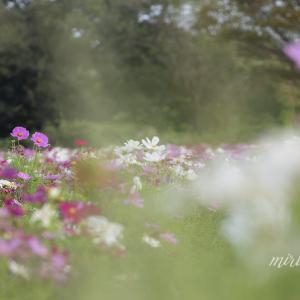 花と鳥と空と・・。