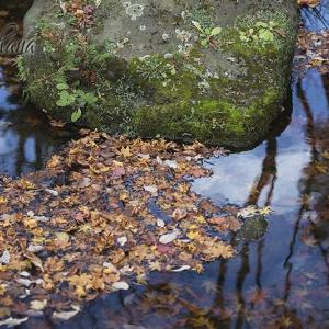 日本庭園の美*昭和記念公園。