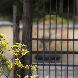 盆栽苑つづき*昭和記念公園。