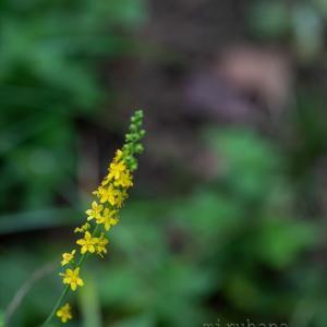 野の花に会いに行きたい。
