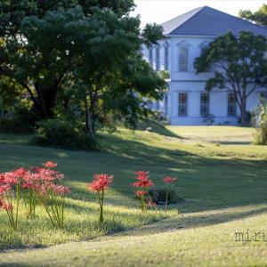 南湖院のヒガンバナ。