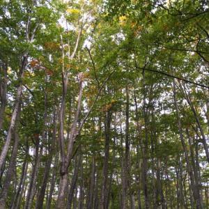 月山氣功合宿①:木と繋がる
