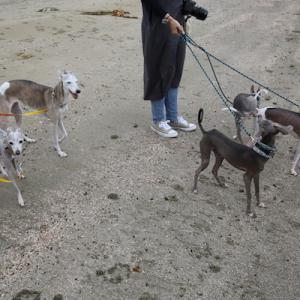 みんなで海のお散歩!