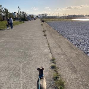 強風の中の散歩!