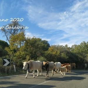 Felice Anno 2020!