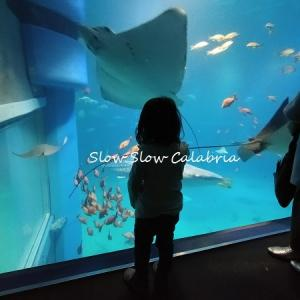 初めての水族館♪