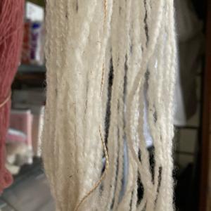 年末にうちに来た子の毛の実験