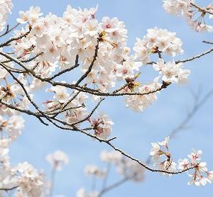 3月/瞑想の集い 3/28(土) 13:00~