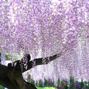 5月/瞑想の集い 5/16(土) 13:00~【花川運動公園】