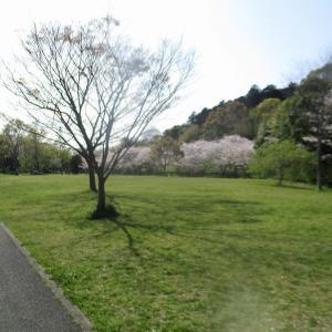 4月/屋外(公園)での瞑想会を開催~コロナ対策瞑想会