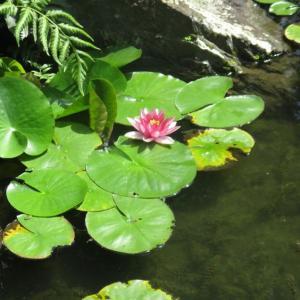 ルアンポー・ティアン派はタム・レンレンなタイ禅~社会と融合する在家仏教のひな形になり得る