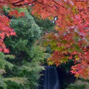 【募集】初心者向け一眼レフカメラ カメラを持って楽しもう♪紅葉おさんぽフォトin万博公園