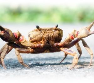ブログネタ:蟹好き?苦手? 参加中