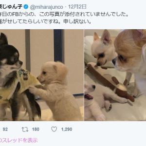 お騒がせ三原じゅん子大先生