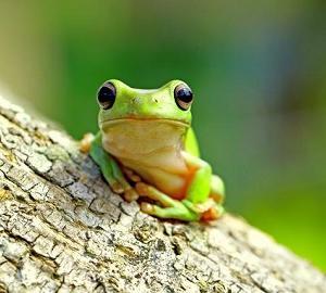 今日はカエルの日・かえる触ったことある?