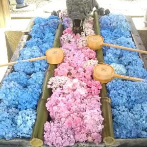 京都柳谷観音・楊谷寺の花手水とあじさいと焼き肉ランチ♪