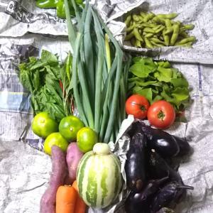 母の無農薬野菜と桃とキタノザウルス君に会いたいな♪