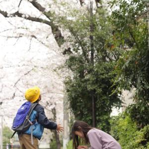 桜フォトで定点観測2020
