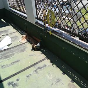 ベランダ防水工事着手しようとしたらシロアリ被害です。